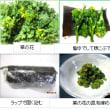 1105 菜の花の昆布締め