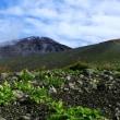 富士山 懐中処の初夏彩追い 2200m~2450m