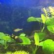 手乗り熱帯魚🐟