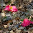 春の陽ざし・浜離宮恩賜庭園にて
