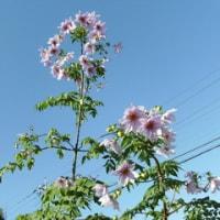 Dalio Imperiestro ankorau floradas cxi-jare