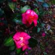 1月20日の花