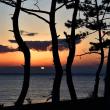 松林と夕日
