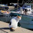 九州B島の猫たち 2017年11月 その7