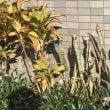 指宿の熱帯植物