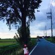 田舎の風景  ポプラ並木が立派で見惚れます