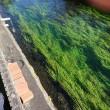 田宿川の水位計を撤去してきました。