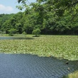 千葉 昭和の森