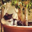 マルタ留学 マルタの猫たち