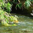 『花水川の野鳥』 ヒヨドリ