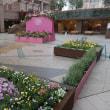 ピンクの恵比寿ガーデンプレイス