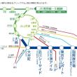 東京オリンピック 豊洲市場 築地市場移転 環状2号線 五輪道路 BRT 選手村 陸の孤島 交通渋滞