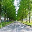 滋賀県のメタセコイア並木