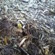 タケノコの芽吹き