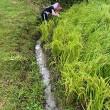 棚田オーナー【下水上げ、草刈り】