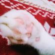 2月22日(木)のつぶやき 2月22日は猫の日ニャう。肉球ポチっと押してみニャ(ФωФ)ノ#猫の日 #ネコの日 #ねこの日 #白猫 #肉球 #CatDays #cat