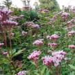 庭を埋める花々