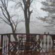 雲海に浮かぶ午後の森。