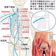 鎖骨下静脈と鼡径部‥‥流れを妨げやすい二つの隘路
