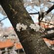幹から咲いた花