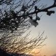 日没後の空・・・と、いろいろ by 空倶楽部