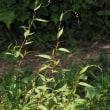 茅ヶ崎公園自然生態園の植物 9月10日