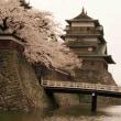 1997桜出会い旅(諏訪高島城)