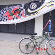 日本の五月は鯉幟