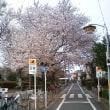 豊島区長崎3丁目公園の桜(2016年4月6日)