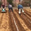 ジャガイモ畝の施肥、耕耘、マルチング