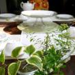 4月のレギュラーメニュー オプストトルテのテーブル