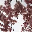 2014.04.10 京都 鴨川 半木の道