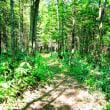 森の遊歩道(18)