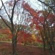 秋に想いを寄せる