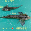 笑転爺の釣行記 4月13日☀ 浦賀港岸壁