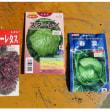 ジャガイモの植付けとセル種まき