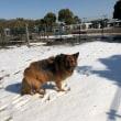 雪の中を〜〜
