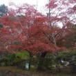 2017 鎌倉の紅葉1
