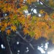 色づいてきた木々