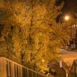 歩道橋からのイチョウ並木