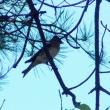 10/21探鳥記録写真:10月上旬に出会った鳥たち