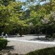 ¢ 一年を通して見かける野鳥:コゲラの姿、ドキドキ眺め ¢ G公園(岐阜県岐阜市)