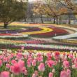万博公園のチューリップ 『8のつく日はwebにお花を』(46)