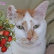 小桃と苺🍓