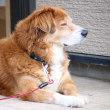 お寺さんの看板犬