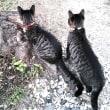 コラム111   首輪をつけた家外猫