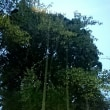 雨と木と土と空と風と、他にもいろいろ、が織り成す世界