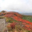栗駒山で紅葉狩り