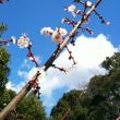 龍口明神社の桜
