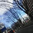 仙台市内定禅寺通り